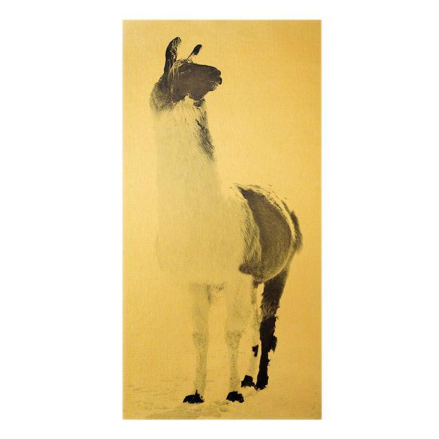 Leinwandbild Gold - Fluffiges Lama - Hochformat 1:2