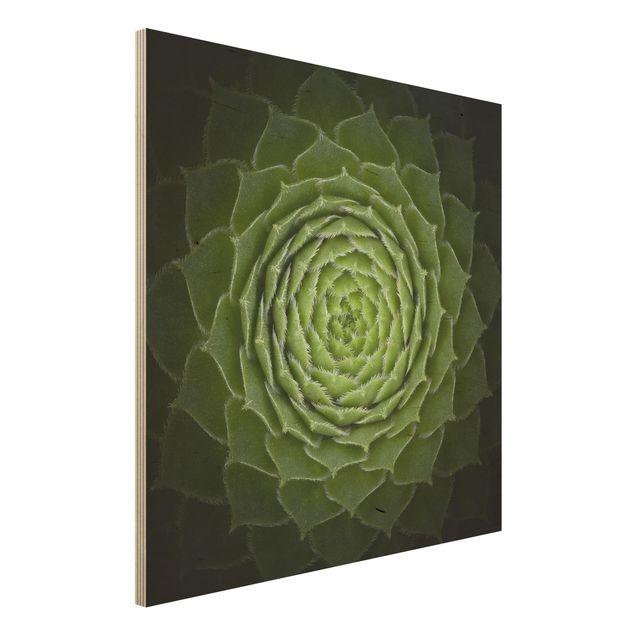 Holzbild - Mandala Sukkulente - Quadrat 1:1
