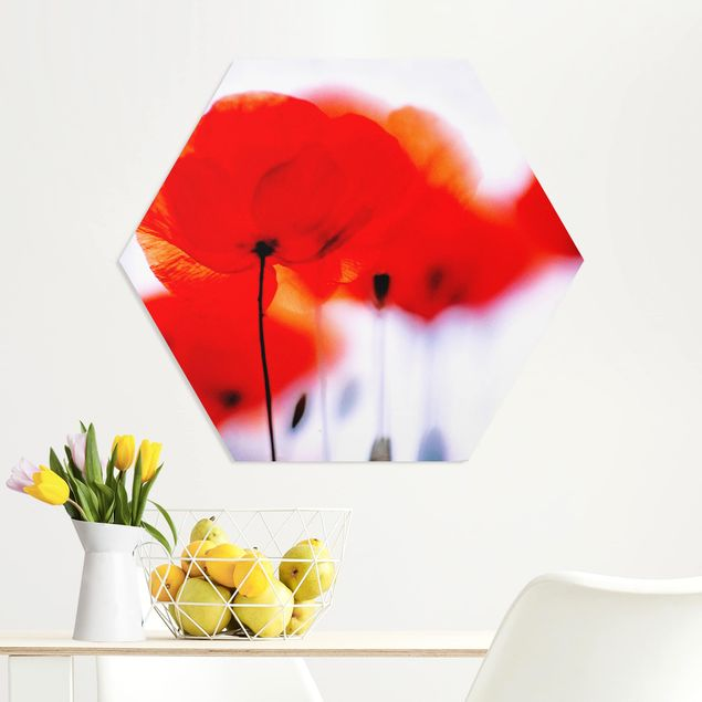 Hexagon Bild Forex - Magic Poppies