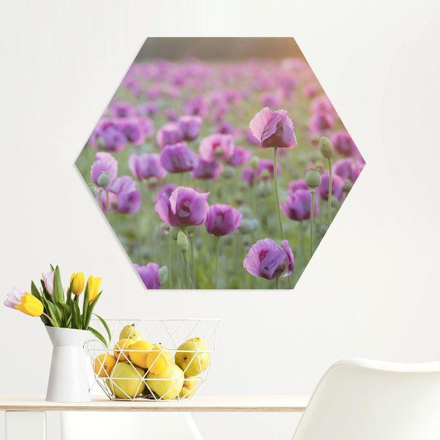 Hexagon Bild Forex - Violette Schlafmohn Blumenwiese im Frühling