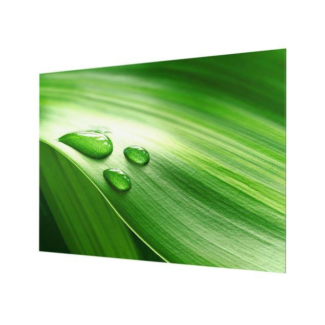 Glas Spritzschutz - Bananenblatt mit Tropfen - Querformat - 4:3