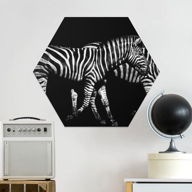 Hexagon Bild Forex - Zebra vor Schwarz