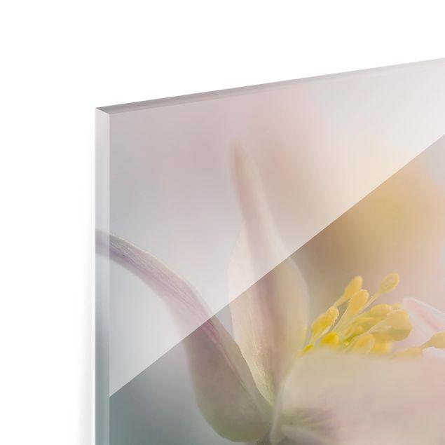 Glas Spritzschutz - Buschwindröschen in Weiß - Quadrat - 1:1