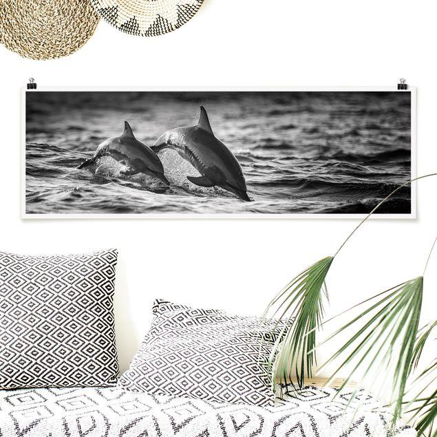 Poster - Zwei springende Delfine - Panorama Querformat