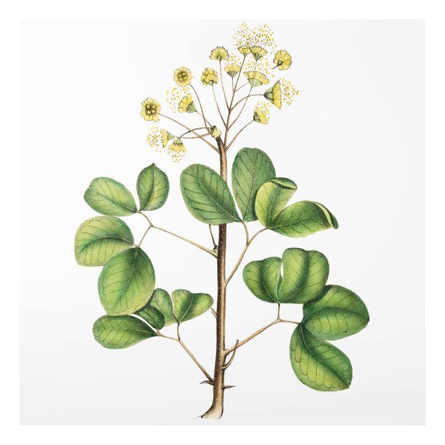 Glas Spritzschutz - Laubwerk mit Blüten IV - Quadrat - 1:1