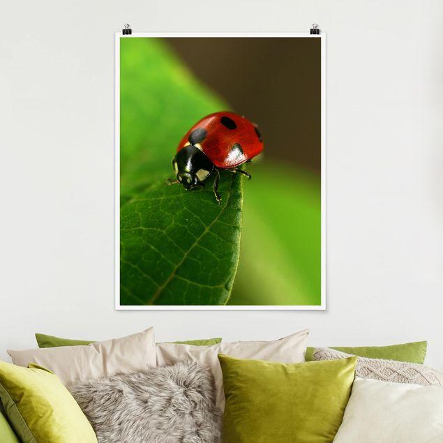 Poster - Lady Bird - Hochformat 3:4