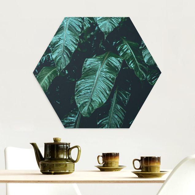 Hexagon Bild Alu-Dibond - Tropische Pflanzen II