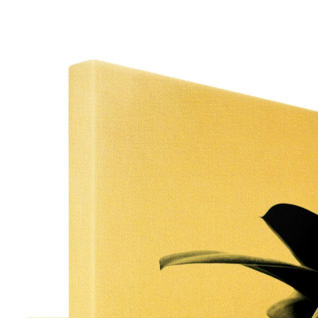 Leinwandbild Gold - Gummibaum Blätter Dunkelgrün - Querformat 3:2