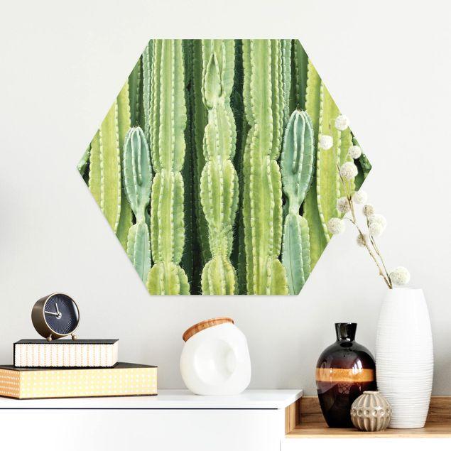 Hexagon Bild Alu-Dibond - Kaktus Wand