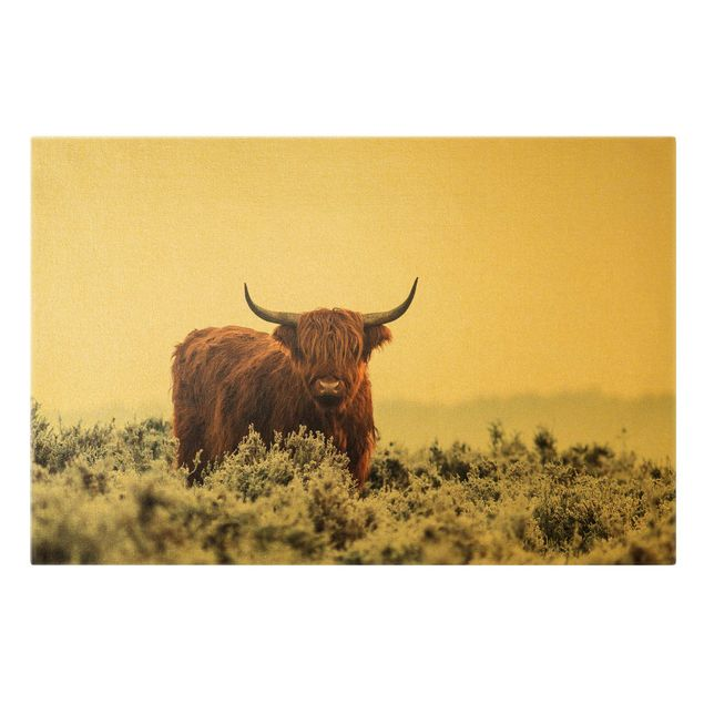 Leinwandbild Gold - Bison in den Highlands - Querformat 3:2