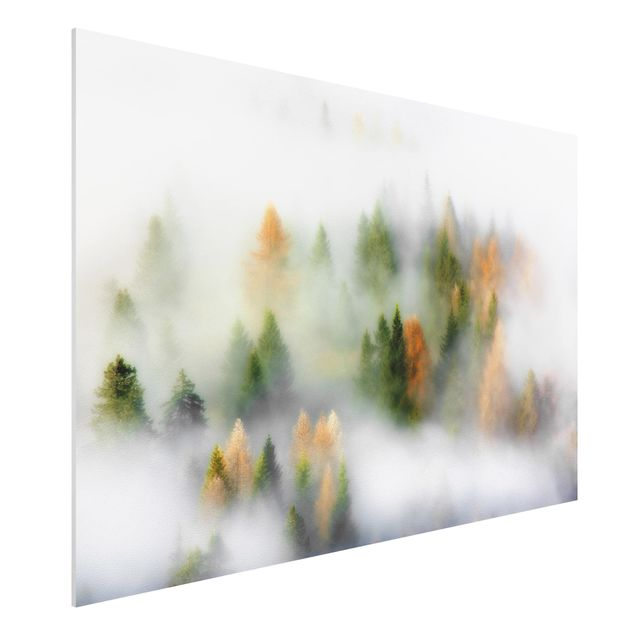 Forex Fine Art Print - Nebelwald im Herbst - Querformat 2:3
