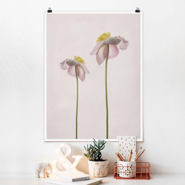 Poster - Rosa Anemonenblüten - Hochformat 3:4