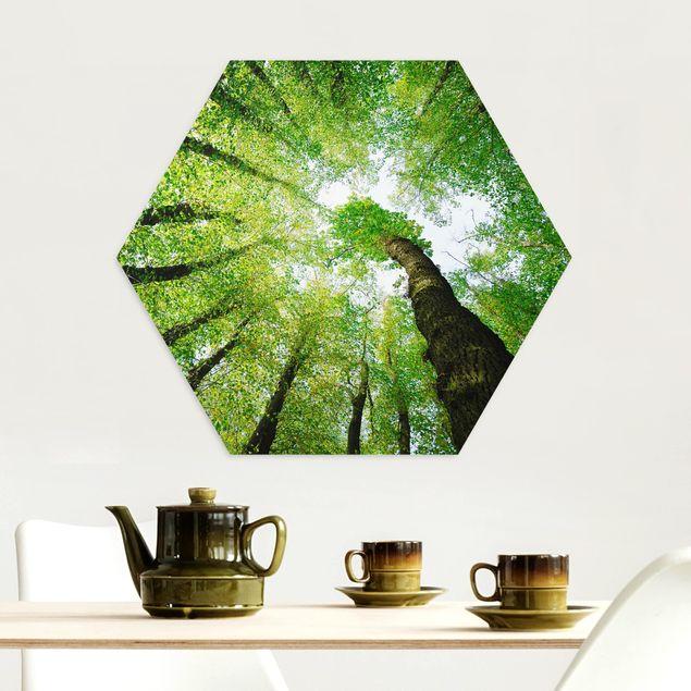 Hexagon Bild Alu-Dibond - Bäume des Lebens
