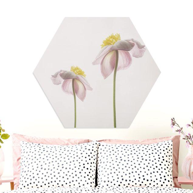 Hexagon Bild Forex - Rosa Anemonenblüten