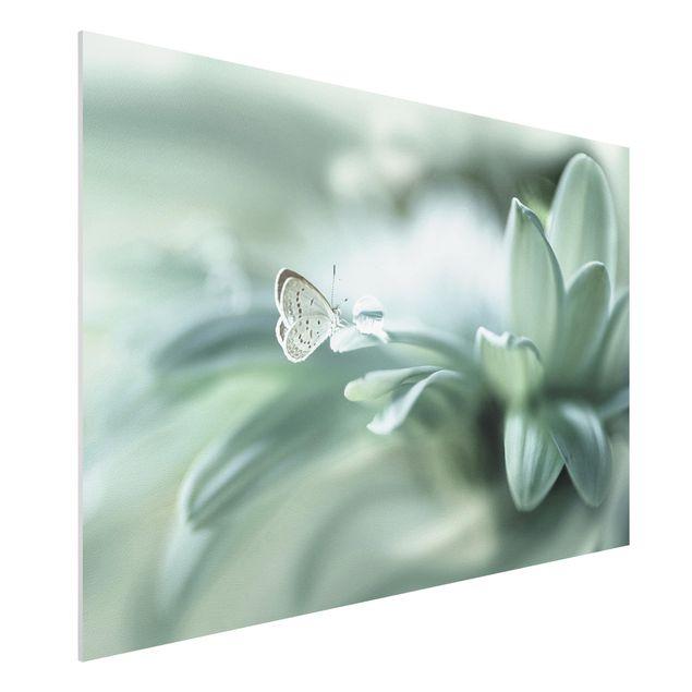 Forex Fine Art Print - Schmetterling und Tautropfen in Pastellgrün - Querformat 2:3