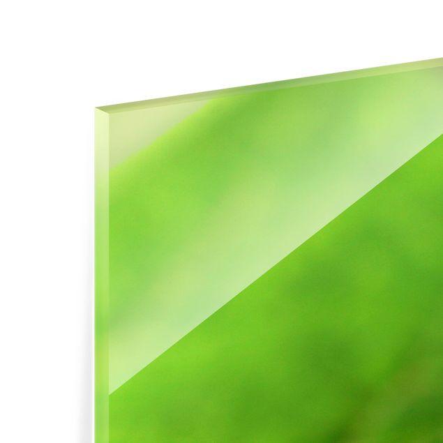 Glas Spritzschutz - Lady Bird - Quadrat - 1:1