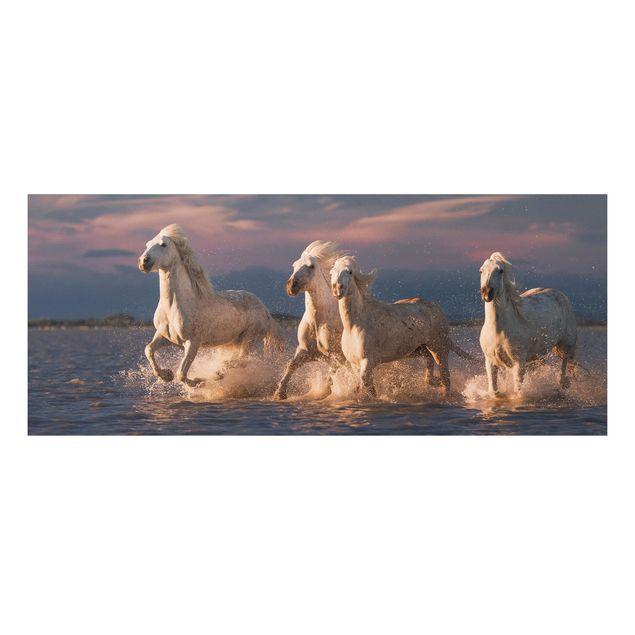 Forex Fine Art Print - Wilde Pferde in Kamargue - Panorama