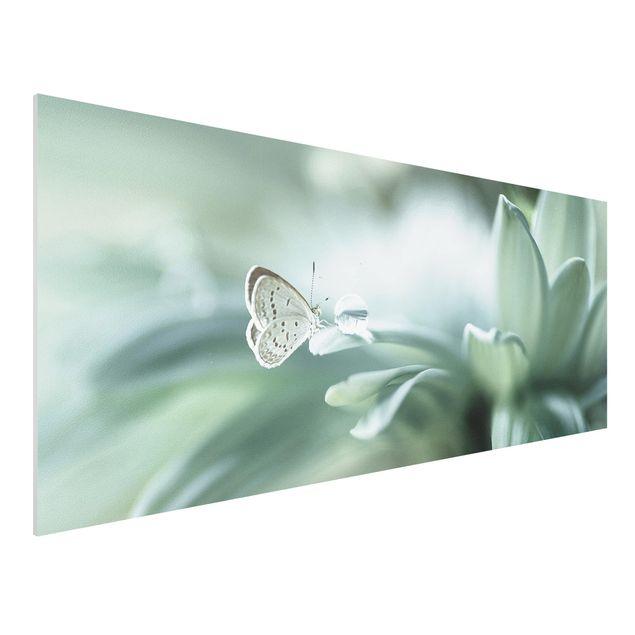 Forex Fine Art Print - Schmetterling und Tautropfen in Pastellgrün - Panorama