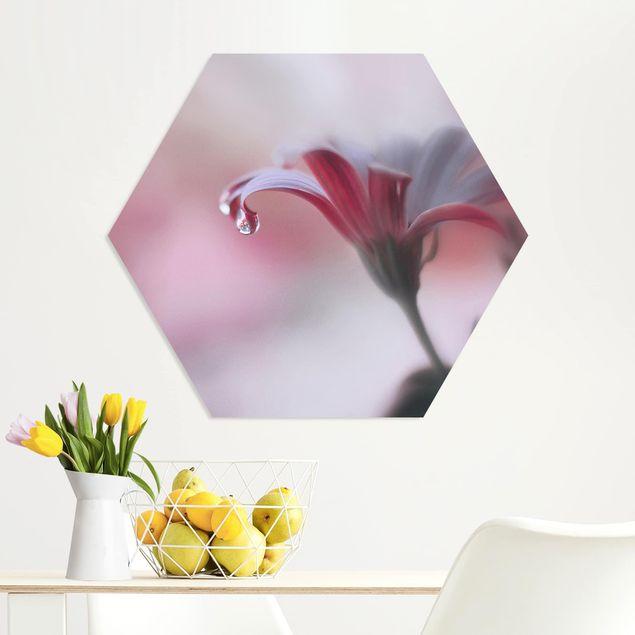 Hexagon Bild Forex - Invisible Touch