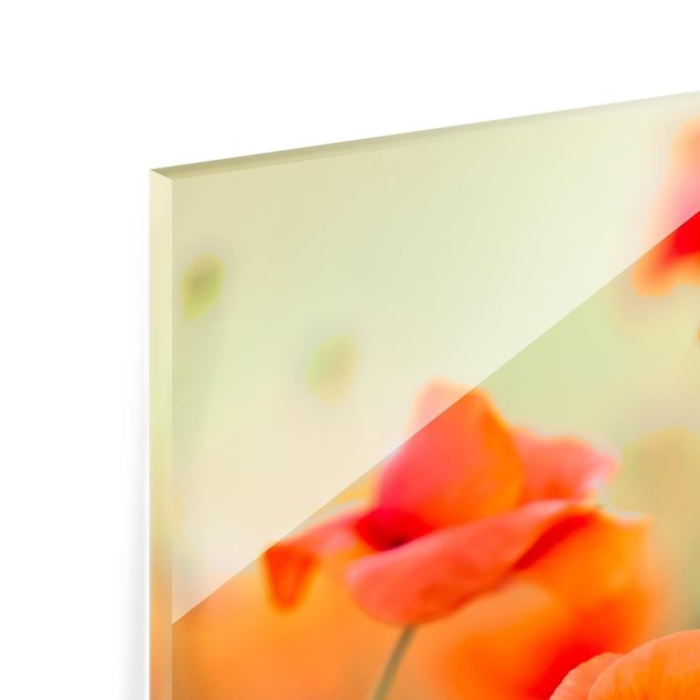 Glas Spritzschutz - Roter Sommermohn - Quadrat - 1:1