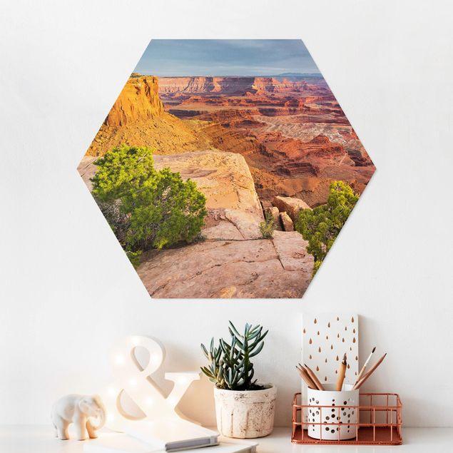 Hexagon Bild Forex - Dead Horse Point Canyonlands National Park USA