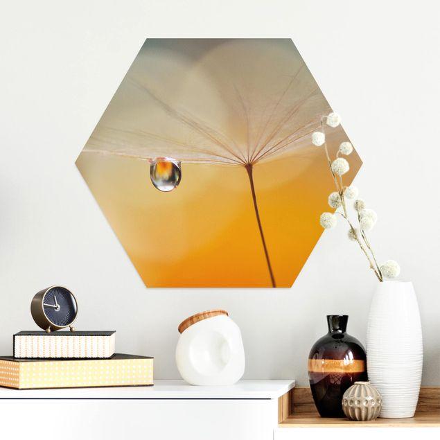 Hexagon Bild Alu-Dibond - Pusteblume in Orange