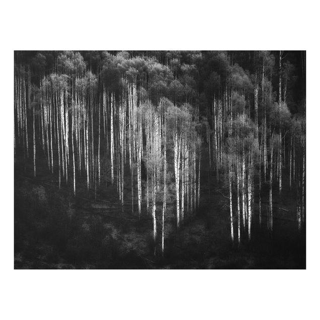 Forex Fine Art Print - Birkenwald in Aspen - Querformat 3:4