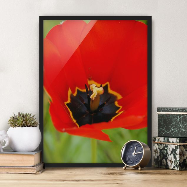 Bild mit Rahmen - Amazing Red Tulips - Hochformat 3:4