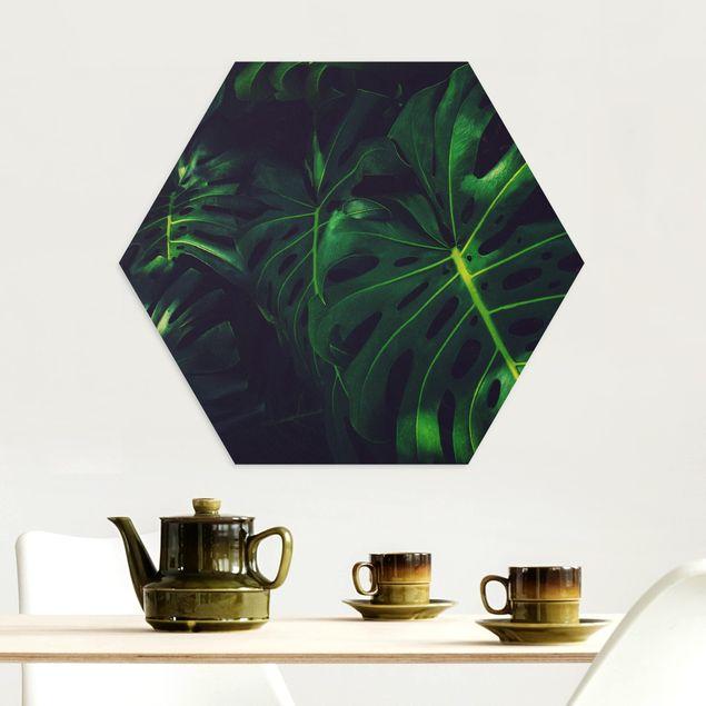 Hexagon Bild Alu-Dibond - Monsteradschungel