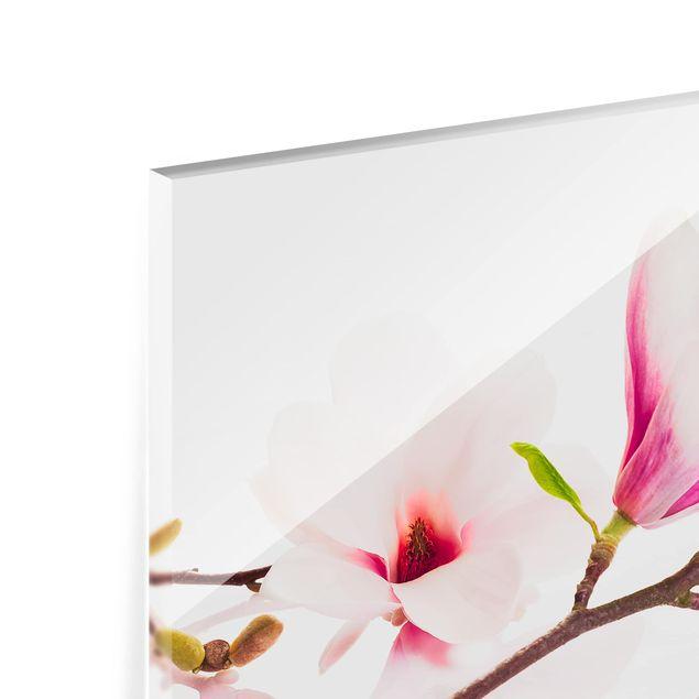 Glas Spritzschutz - Zarter Magnolienzweig - Querformat - 4:3
