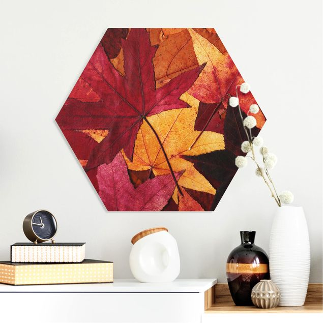 Hexagon Bild Forex - Coloured Leaves