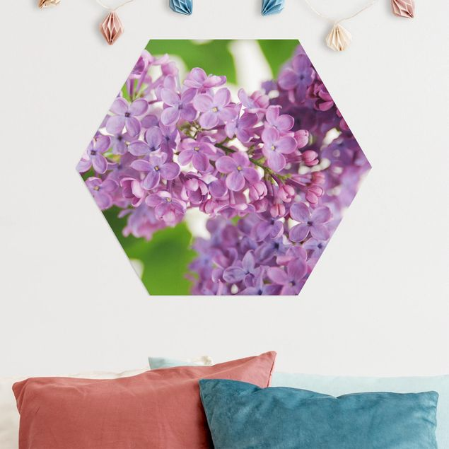 Hexagon Bild Alu-Dibond - Lovely Lilac