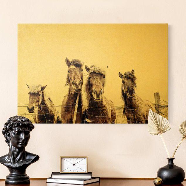 Leinwandbild Gold - Island Pferde - Querformat 3:2