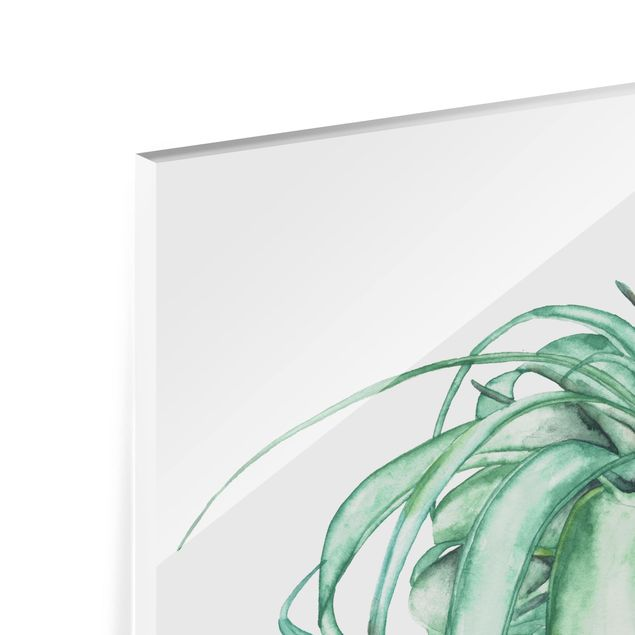 Glas Spritzschutz - Luftpflanze Aquarell IV - Querformat - 4:3