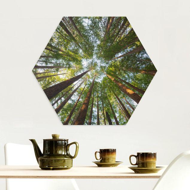 Hexagon Bild Alu-Dibond - Mammutbaum Baumkronen
