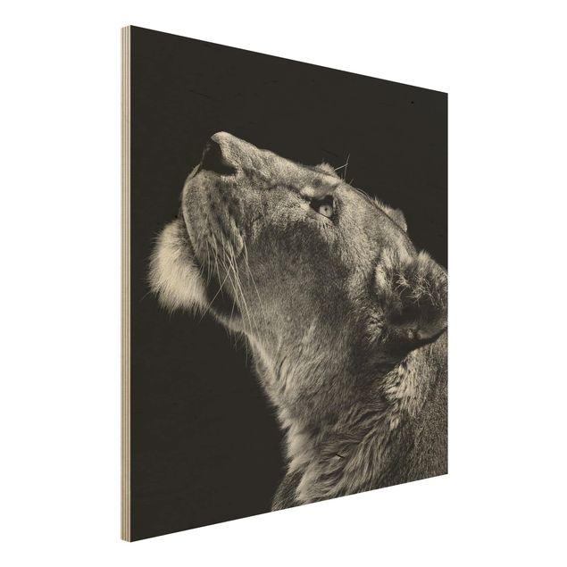 Holzbild - Portrait einer Löwin - Quadrat 1:1