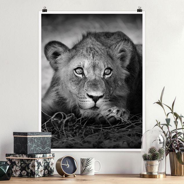 Poster - Lurking Lionbaby - Hochformat 3:4