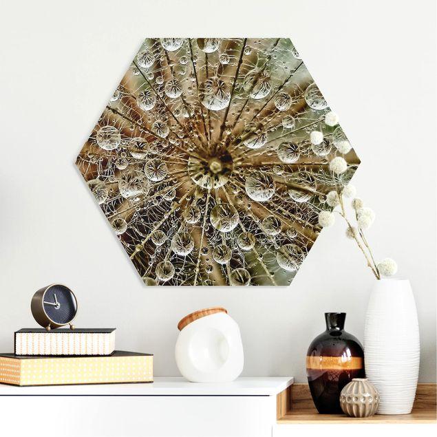 Hexagon Bild Forex - Pusteblume im Herbst