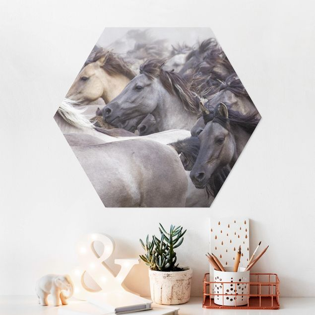 Hexagon Bild Forex - Wildpferde