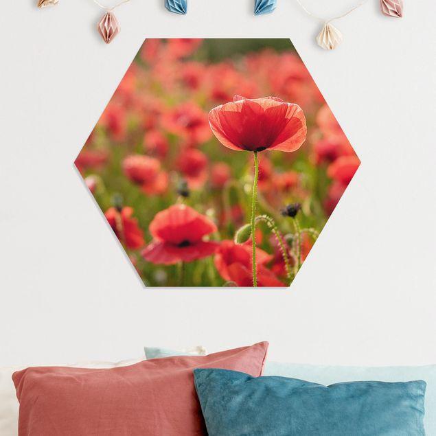 Hexagon Bild Forex - Mohnfeld im Sonnenlicht