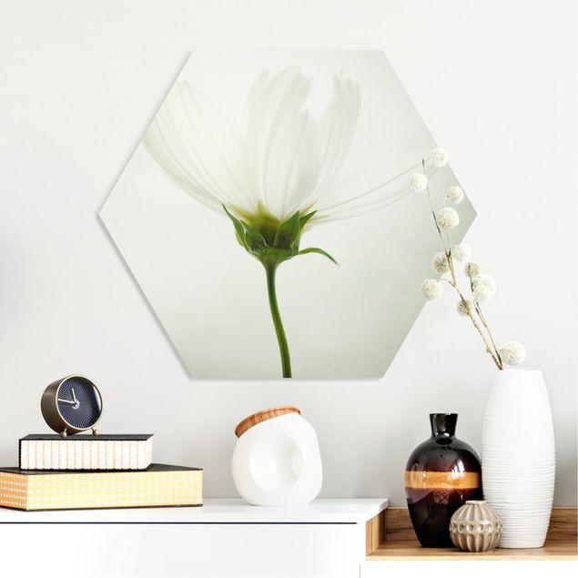 Hexagon Bild Forex - Weiße Cosmea