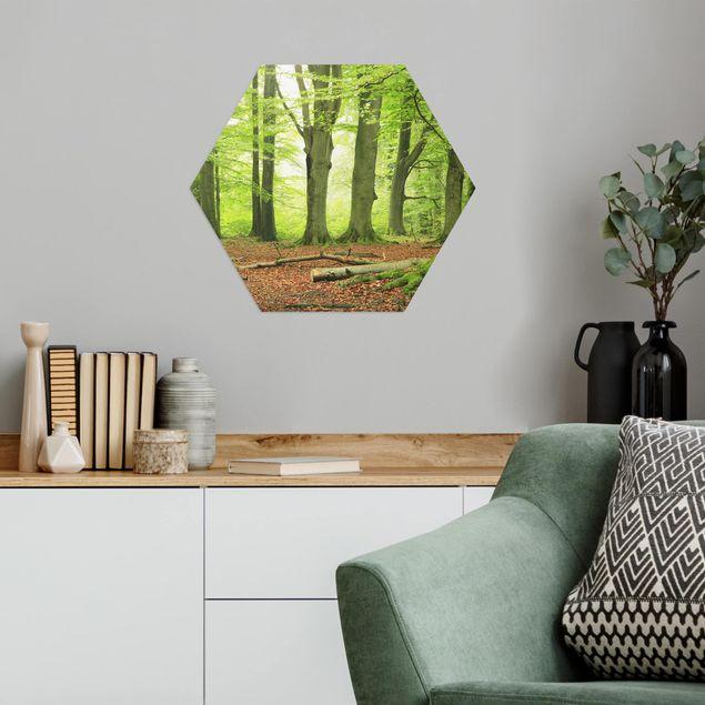 Hexagon Bild Alu-Dibond - Mighty Beech Trees