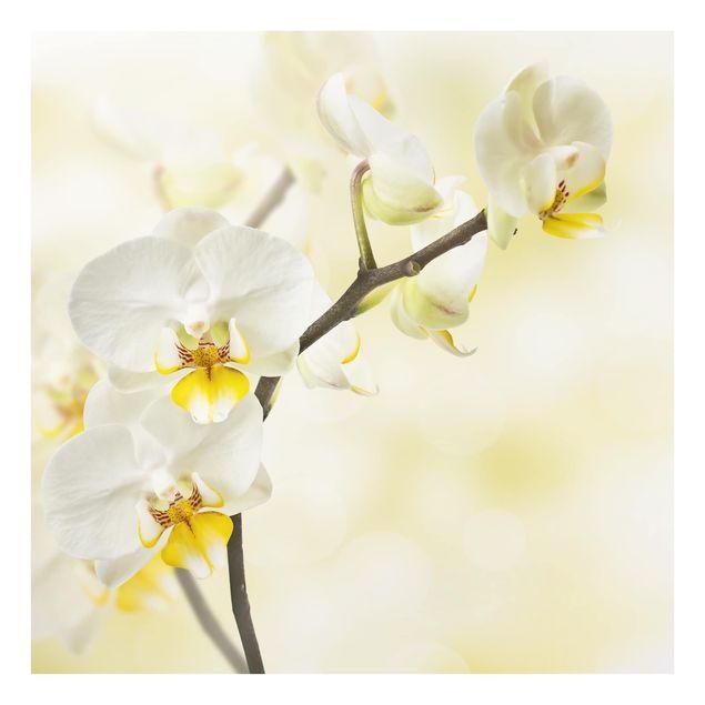 Glas Spritzschutz - Orchideen Zweig - Quadrat - 1:1