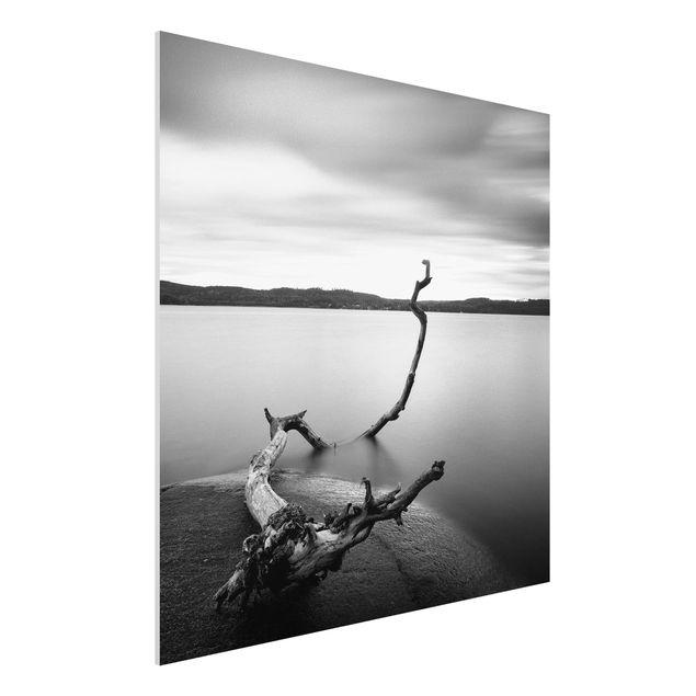 Forex Fine Art Print - Sonnenuntergang am See schwarz-weiß - Quadrat 1:1