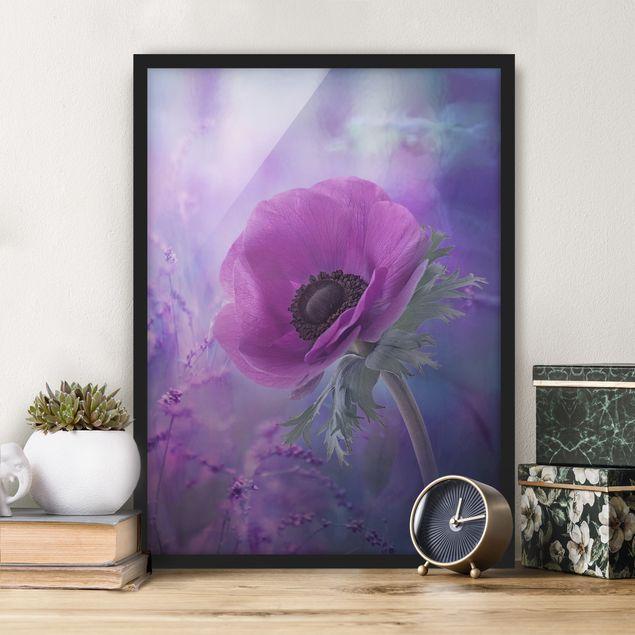 Bild mit Rahmen - Anemonenblüte in Violett - Hochformat 3:4
