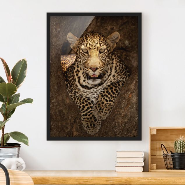 Bild mit Rahmen - Leopard ruht auf einem Baum - Hochformat 3:4