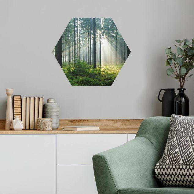 Hexagon Bild Alu-Dibond - Enlightened Forest