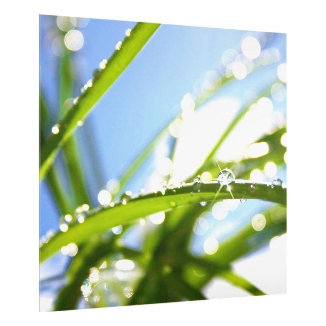 Glas Spritzschutz - Kiss of Sun - Quadrat - 1:1