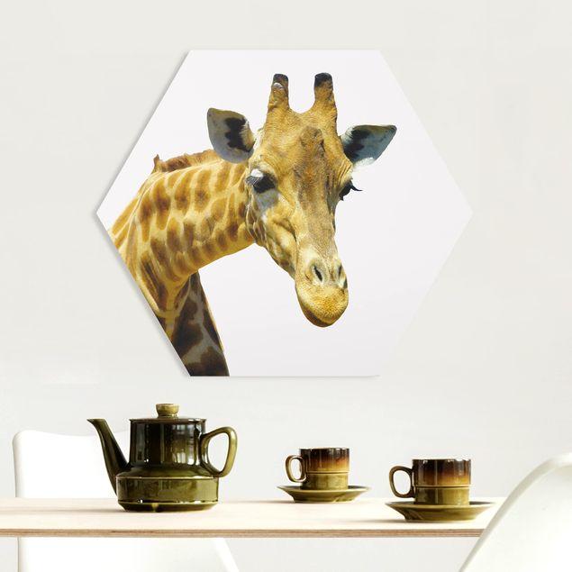 Hexagon Bild Forex - No.21 Neugierige Giraffe