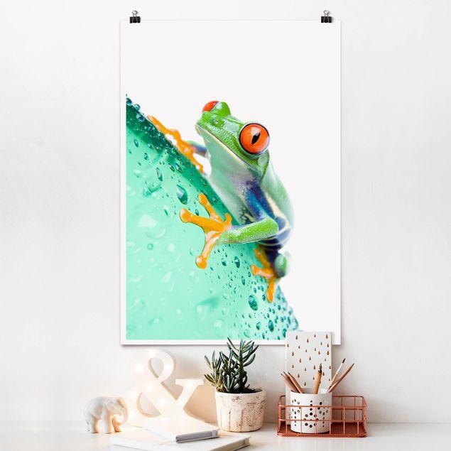 Poster - Frog - Hochformat 3:2